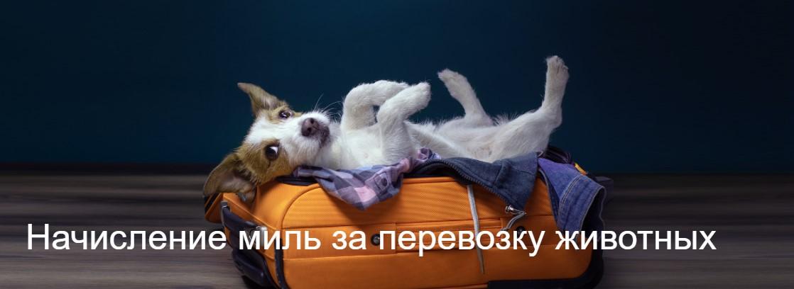 Мили Аэрофлот Бонус за перевозку животных
